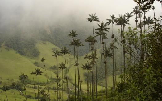 Valle de Cocora, Diego Torquemada