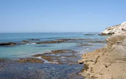 Sudáfrica - Phyzome for Sean Conradie