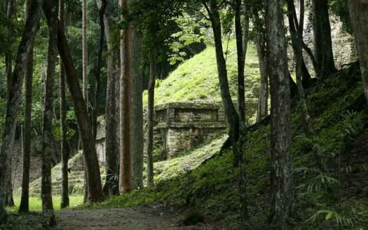 Ruinas en la jungla de Tikal, Guatemala - Frans-Banja Mulder