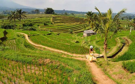 Campos de arroz de Jatilwih, Bali (Indonesia) - Paxson Woelber | namasteviajes.com