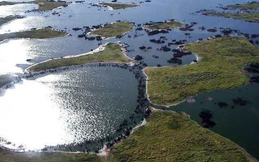 Pantanal, Brasil - Alicia Yo at he English language Wikipedia   namasteviajes.com
