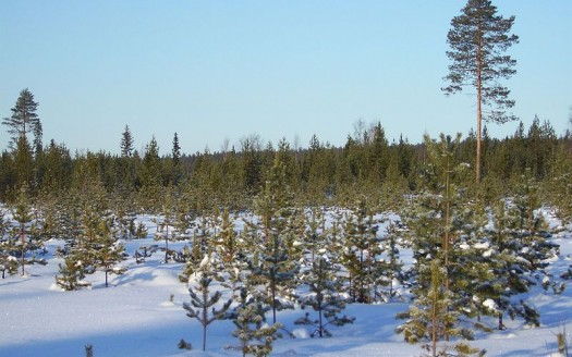 Rovaniemi, Laponia (Finlandia) - Ocean Star | namasteviajes.com